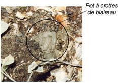 Pot à crottes de Blaireau