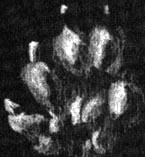 hermine_a.jpg (11773 octets)