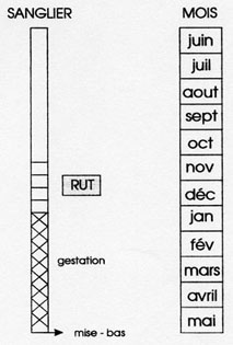 Calendrier de reproduction du Sanglier